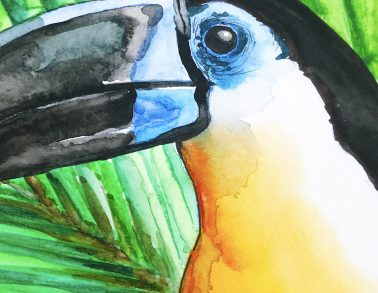 Toucan Watercolour © JJPotter
