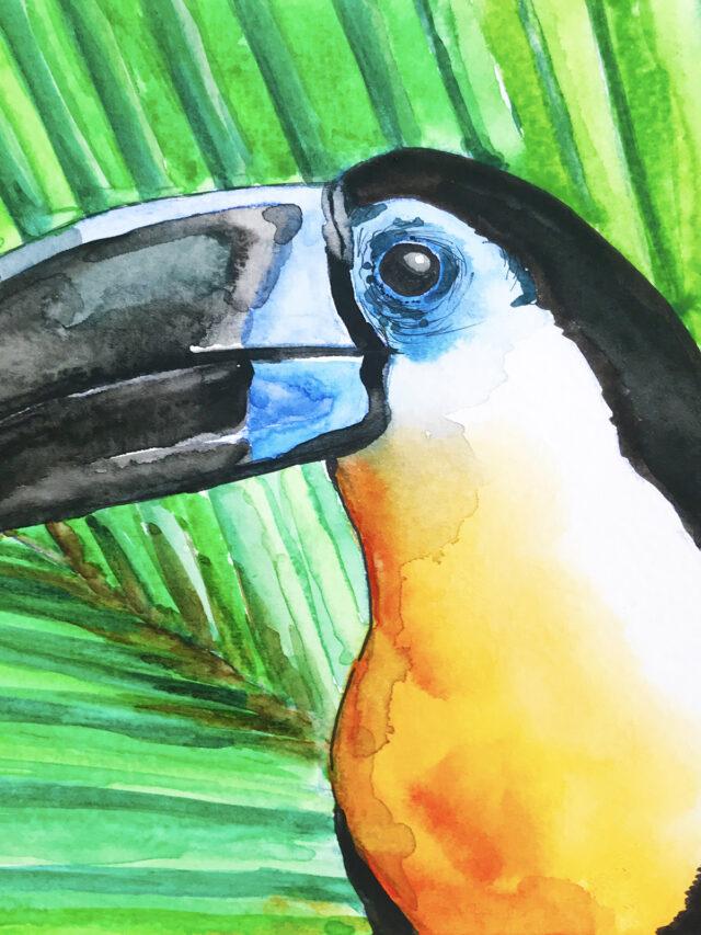 Toucan Watercolour © JJPotter